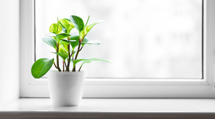 How to Clean and Maintain Window Sills